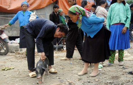 Lợn ở chợ vùng cao được người dân bán theo con chứ không phải cân ký như ở miền xuôi.