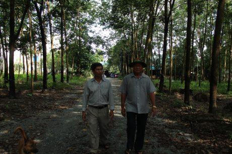 Anh Lê Văn Bảy (bên phải) trên vườn cây cao su.