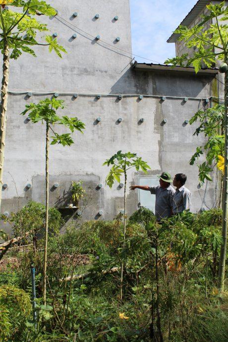 Anh Lê Văn Bảy (người đội nón tai bèo) giới thiệu nhà nuôi yến bên trang trại cao su.