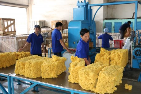 Tất cả sản lượng thu mua đều được sản xuất sản phẩm SVR CV50-60 và đạt tỷ lệ xuất khẩu trên 99%. Ảnh: Vũ Phong