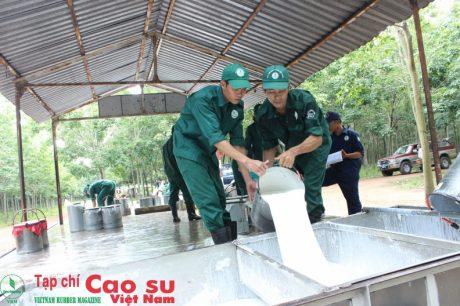 CNLĐ là đối tượng được chú trọng phát triển Đảng tại Cao su Dầu Tiếng