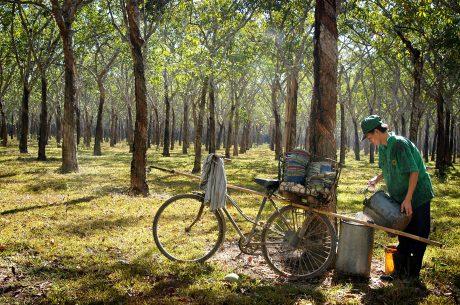 Ảnh: DZũng Nguyễn