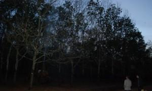 Lãnh đạo công ty và nông trường giám sát công tác phun thuốc tại NT Bờ Ngoong.