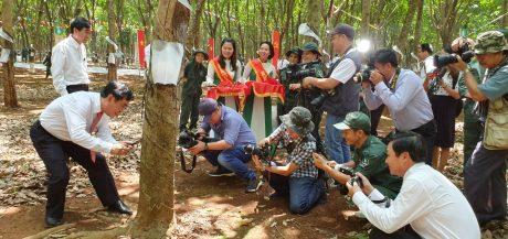 Phóng viên báo đài tác nghiệp tại lễ ra quân khai thác mủ.