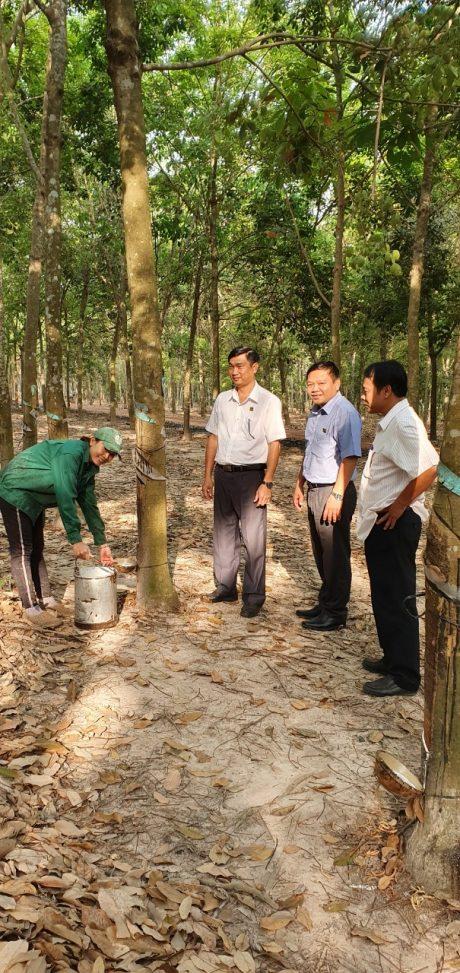 Lãnh đạo NT Lai Uyên thăm hỏi, động viên công nhân tại lô cao su vào những ngày đầu năm mới 2020
